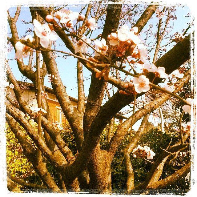 #white #intreccio #trees #nature #green #wood #corteccia #garden #home #beauty #wood #pruno #flower #power #flowerpower #instanature #instamoment #feeling #petali #novellaorchidea #novella #orchidea #raccontierotici #racconti #ebook #ricardo #tronconi #er
