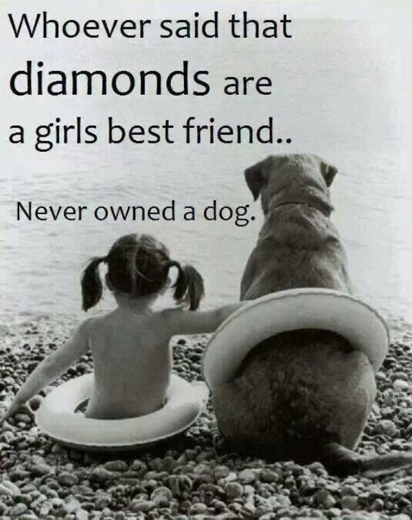 Quotes About Dogs 1865 Best Dogs Images On Pinterest  Doggies Funny Animal Pics And .