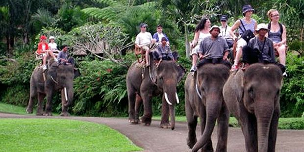 There are plenty of choices should you travel with your family. Media coverage on travel.kompas.com