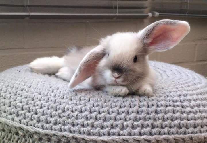 Hase auf einem Hocker, aaw süß. #kaninchen – Snacks