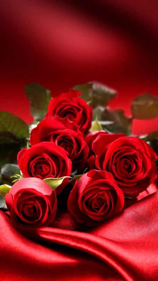 Frivolous Fabulous - Beautiful Velvet Red Roses in the Boudoir