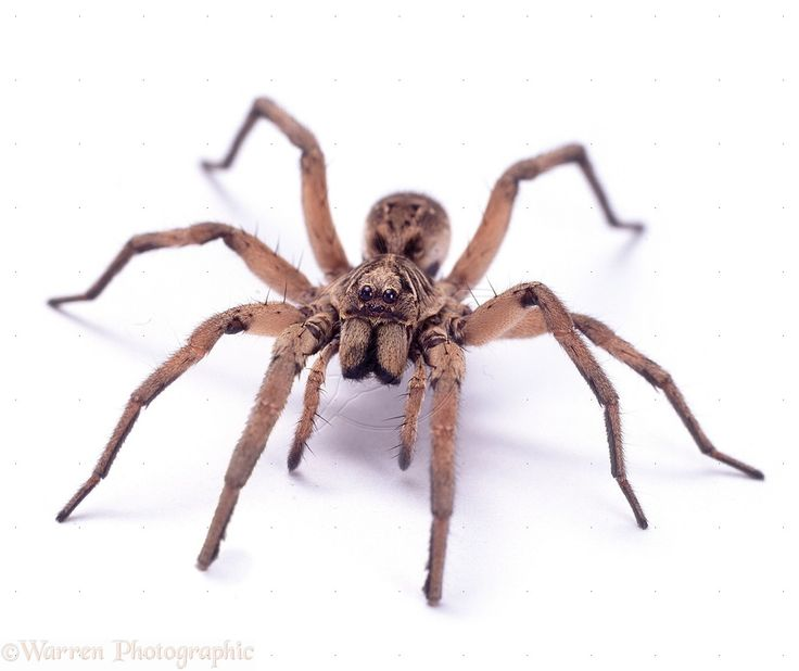 Spider Pictures HD Wallpaper