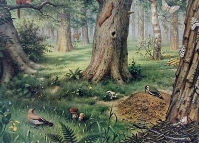 Schoolplaat 'In het bos' van M.A. Koekoek