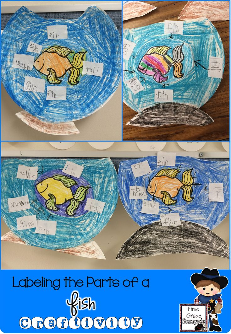 What a fun paper plate fish craft for kids to study the parts of a fish! Perfect for an fish unit or ocean theme! Hands-on and fun for children in preschool, Kindergarten, and even First Grade!