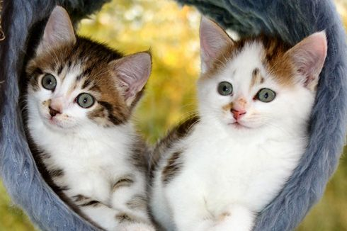 Bringing up a litter of kittens – behavioural considerations | international cat care