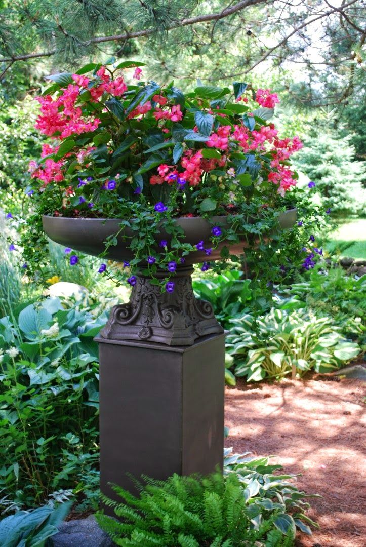 Top 25 ideas about container plants spring summer on pinterest window boxes container - Flowers for container gardening ...