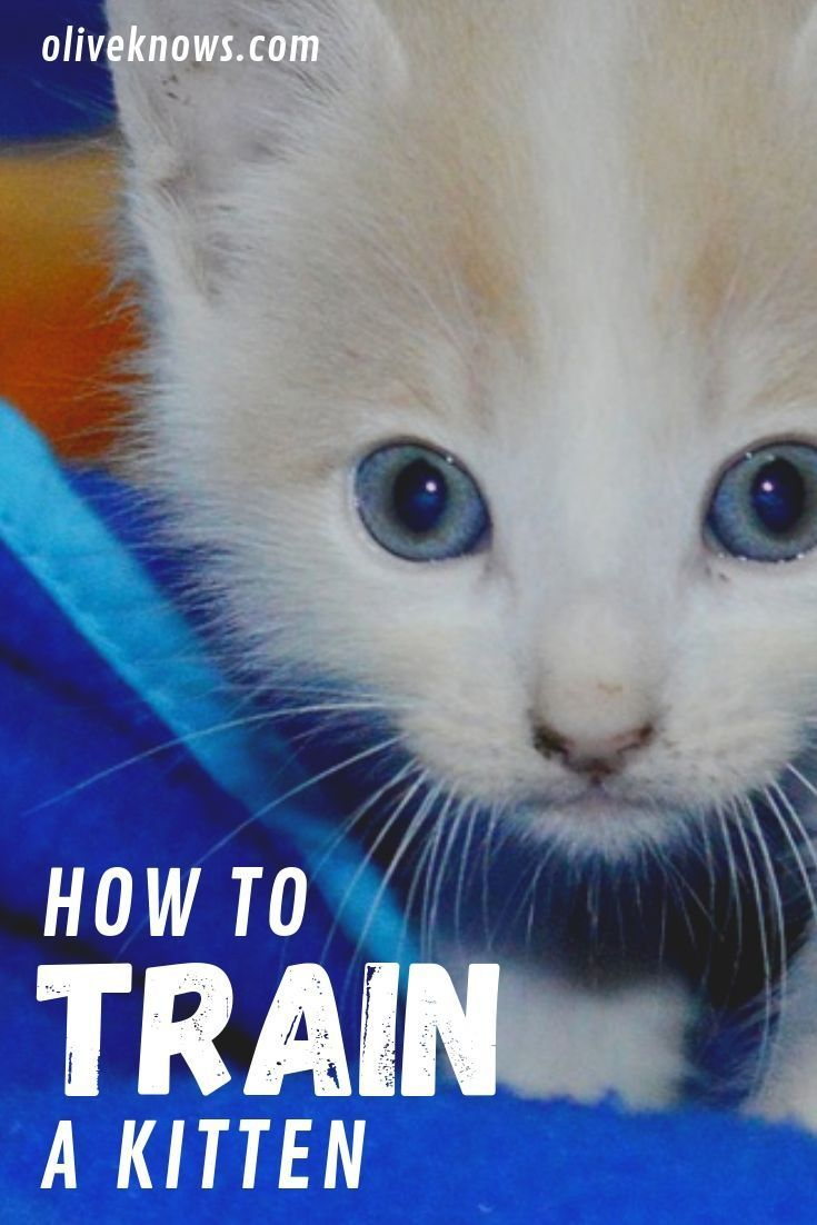How To Train A Kitten Oliveknows Training A Kitten Cat Training Cat Training Tricks