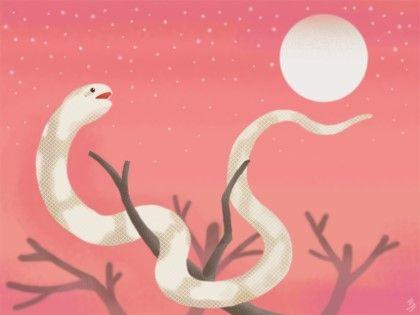 snake/moon/illustration/illust