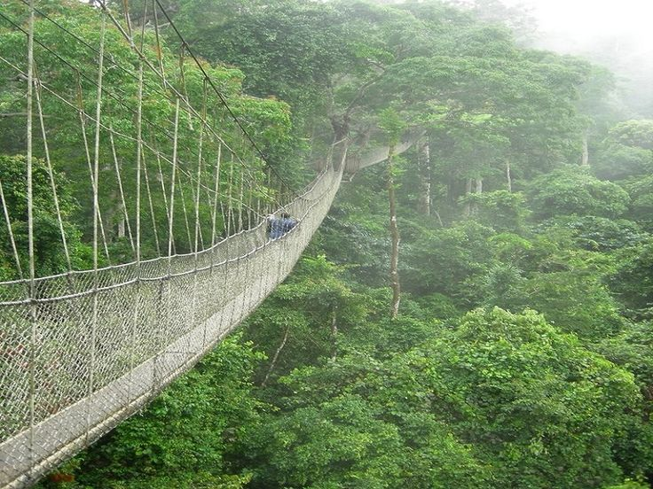 3. The Canopy Walk – Ghana