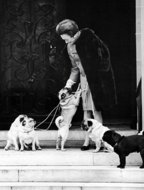 The Duchess of Windsor -  pug royalty