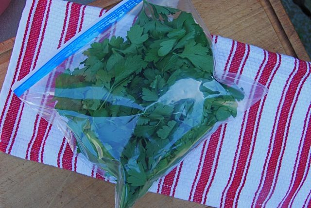 F LAT-LEAF, OR ITALIAN, PARSLEY IS MACHO COMPARED TO CURLY-LEAF, particularly the selection called (grrrr!) 'Gigante.' I like my parsley [read more…]