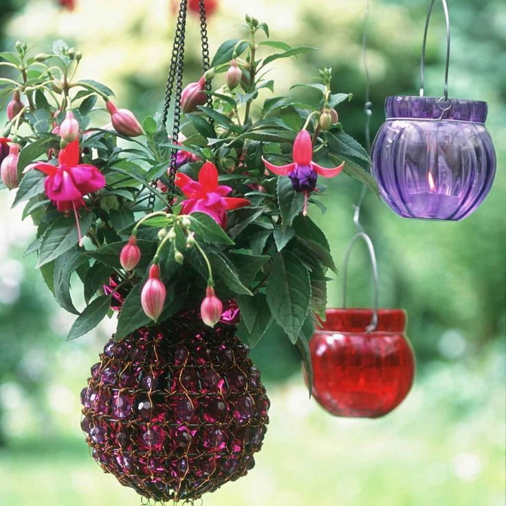 Hang a basket of beautiful blooms  with Single species (like the fuschia seen here), or foliage-rich baskets – a bountiful mixture of fern varieties is particularly striking – are ideal for spring.