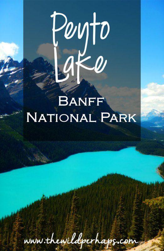Alberta, Canada I Banff National Park I Peyto Lake Banff National Park I Peyto Lake Hike I Bow Summit I Best of Banff I Things to Do in Banff National Park I Banff Hikes I Peyto Lake Trail