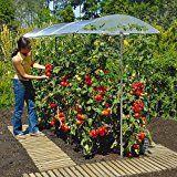 Tomaten richtig düngen, gießen und mulchen
