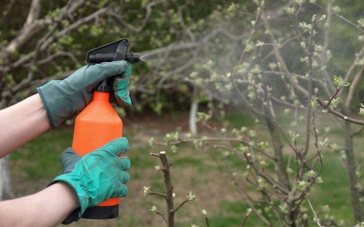 Невозможно вырастить здоровый сад без периодической обработки деревьев и кустарников защитными средствами от вредителей и болезней. Одно из таких средств − железный купорос.