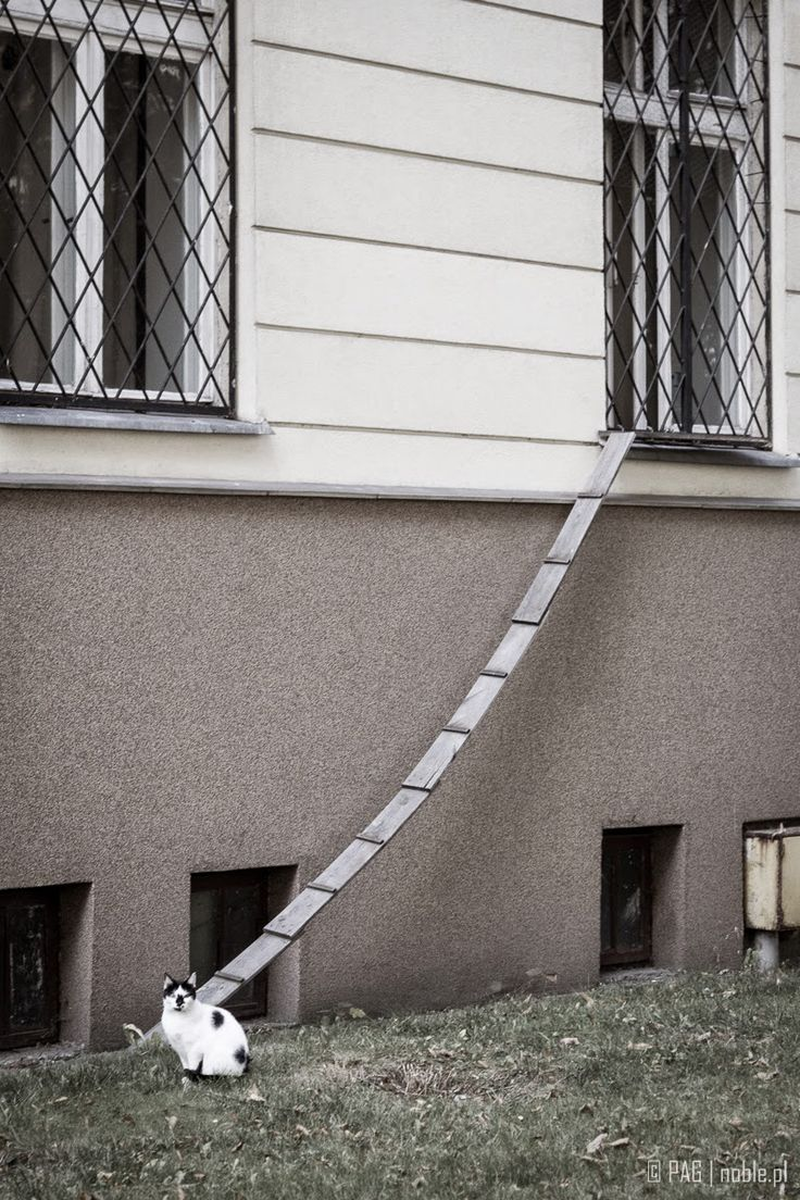 Cat's ladder, Uniwersytecka street, Ochota district in Warsaw, Poland