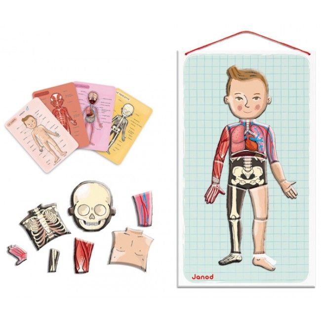 Learn about the human body while having fun! This is a magnetic board puzzle with 76 magnets to learn and assemble the different parts of the human body. Included are four cards detailing the skeleton, organs, muscles and body. #entropytoys #learning #learningtoys #puzzle #humanbody #biology