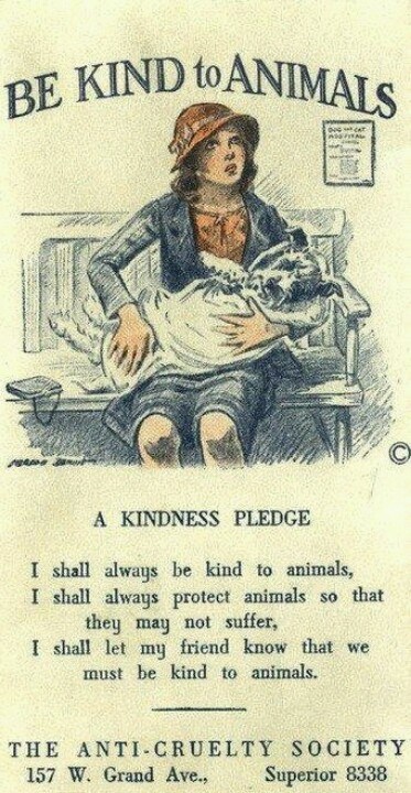 Be Kind To Animals.....STOP ANIMAL CRUELTY!