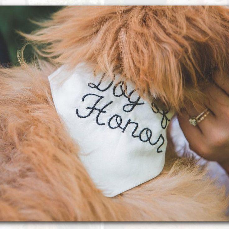 Dog Wedding Accessories in my #etsy shop: Dog Bandana, slide on bandana, dog lover, pet friendly wedding, flower girl dog, ring bearer dog, dog of honor, best dog http://etsy.me/2nnrAZV #pets #white #wedding #dogbandana #pet #slipon #bandana