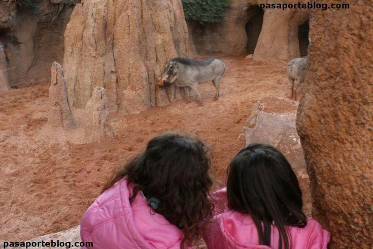 #zoo con niños #valencia #zoovalencia #bioparc