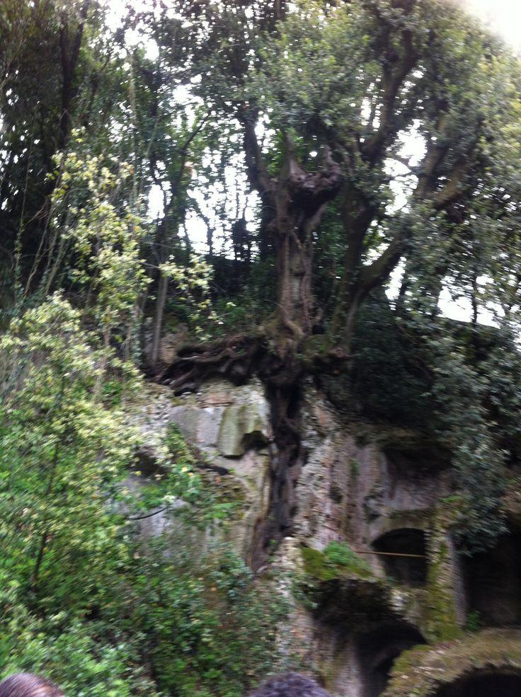 la natura intrecciata con la pietra