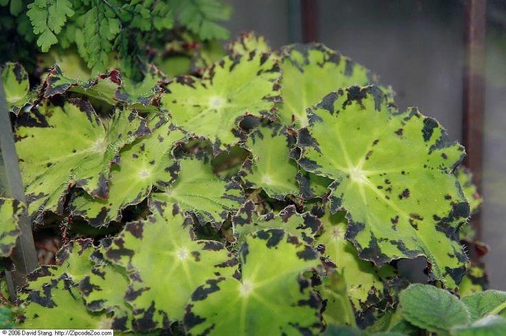 221 best garden terrarium plants images on pinterest. Black Bedroom Furniture Sets. Home Design Ideas