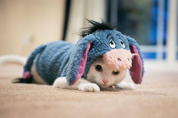 Des chats trop mignons dans la peau d'autres animaux