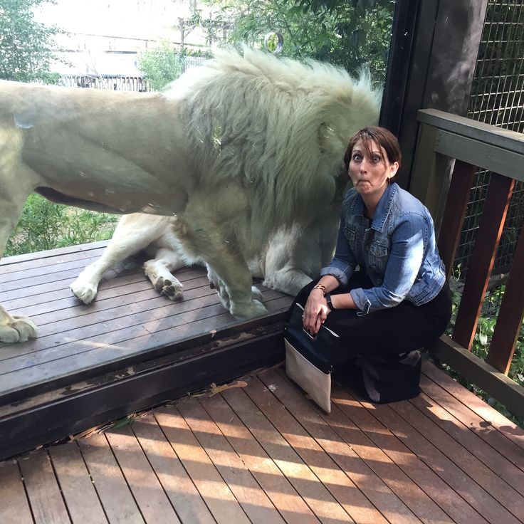 @HerCanberra and her guests got up close and personal with the White Lions at the National Zoo and Aquarium. #humanbrochure