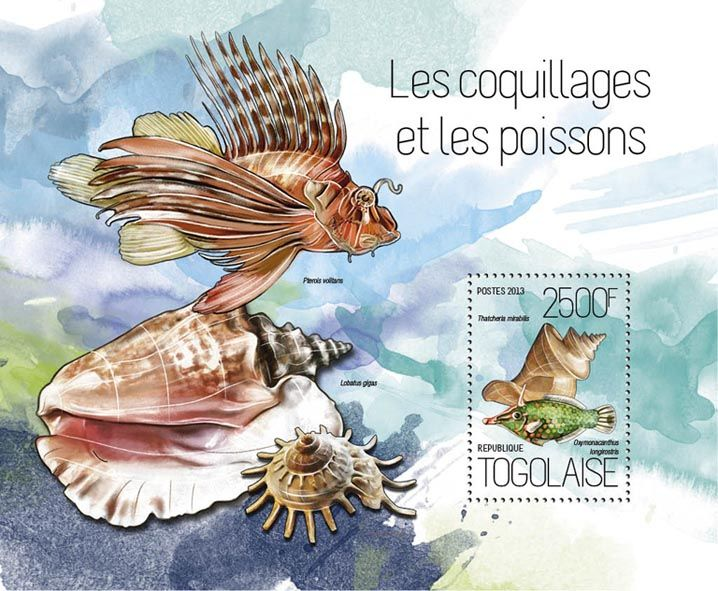 TG 13819 b – Shells and fish, (Thatcheria mirabilis, Oxymonacanthus longirostris).