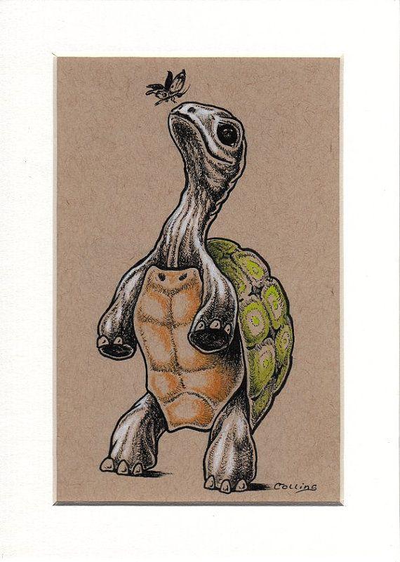 tortoise drawing for pinterest - photo #16