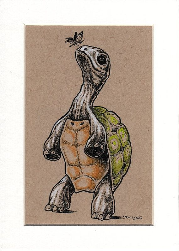 Tortoise and Butterfly original ink drawing by by bryancollins, $35.00