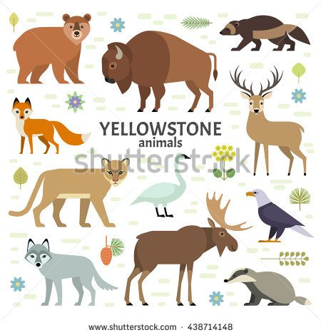 Vector illustration of Yellowstone National Park animals: moose, elk, bear, wolf, fox, bison, badger, wolverine, mountain lion, bald eagle, swan, isolated on transparent background.