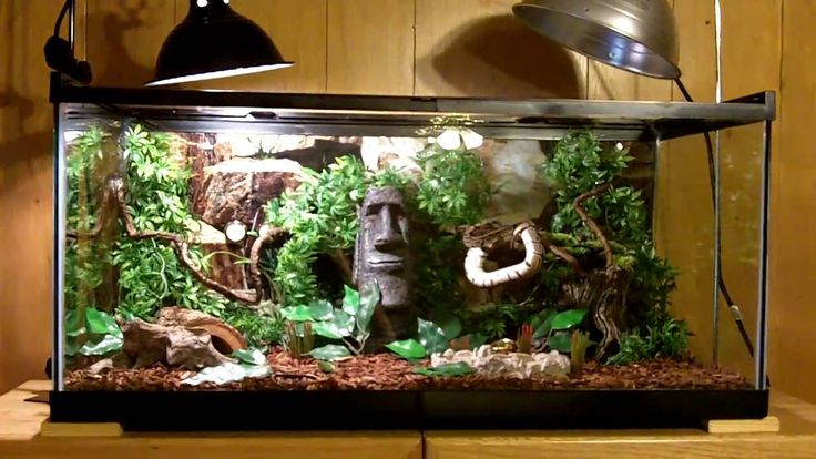 Snake Cage Set Up Maxresdefault1531 Jpg Pets Pinterest Python Snake Cages And Search