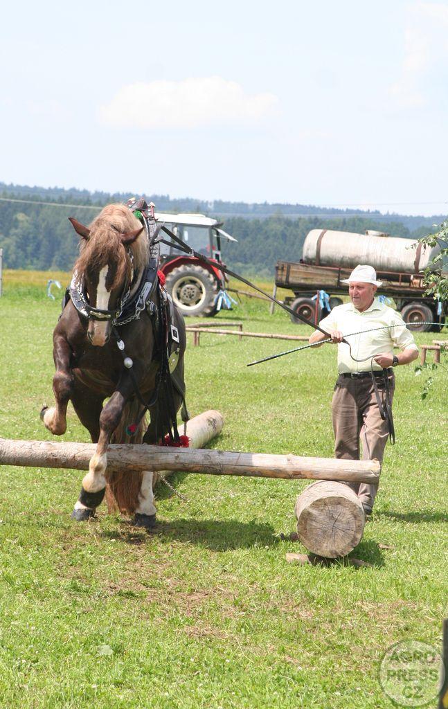 Národní plemena koní – chladnokrevná plemena – Agropress.cz