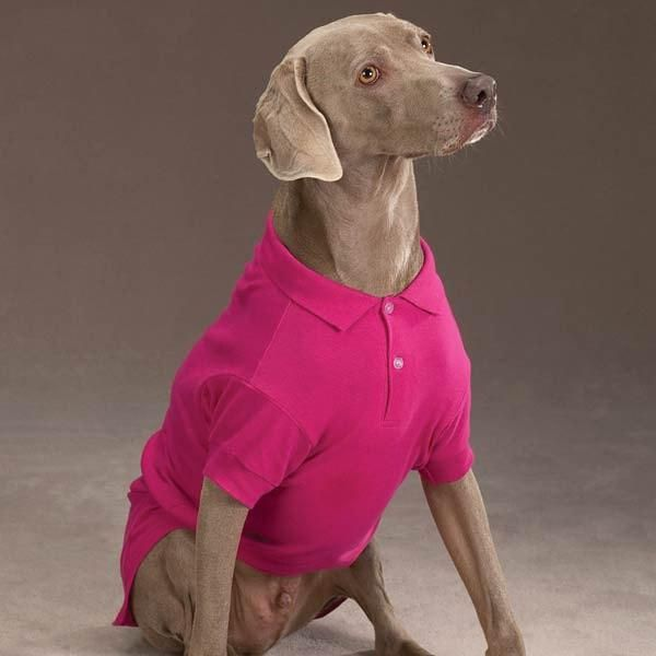 Polo Dog Shirt - Raspberry Sorbet. Your pup will look positively preppy wearing this classic Pink Polo Shirt! Ribbed knit cuffs and two-button collar. Includes hole for leash attachment. Made of machine washable 100% cotton. Why We Love It: A Raspberry Sorbet Pink Polo Shirt is a staple items for your dog's wardrobe! Our Zack & Zoey Dog Polo Shirt is a simple, tailored and sporty look for dogs. On any occasion, you really can't go wrong with a polo shirt for dogs! The polo...