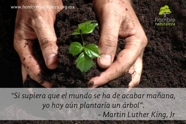"""Si supiera que el mundo se ha de acabar mañana, yo hoy, aún plantaría un árbol."" Martin Luther King, Jr"