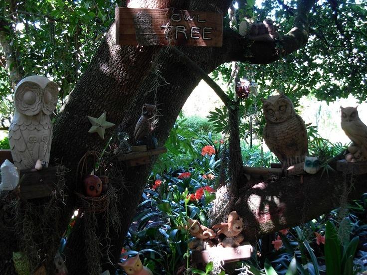 Owls and clivias