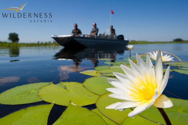 Jao Camp - During an unusually high flood season, game drives begin by boating out to a nearby Hunda Island where the vehicles are waiting, and the drive begins from there. Huge herds of red lechwe can be seen, followed by their primary predator - prides of lion. #Safari #Africa #Botswana #WildernessSafaris