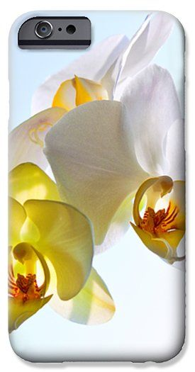 ORCHID WITH SKY BACKGROUND by VICTOR KOVCHIN.   Belong to the Galery Russian Artists New Wave  Elegant and beautiful white orchid against the light blue sky. #RussianArtistsNewWave #Orchid #FlowerArt #VictorKovchin #WhiteOrchid #Garden#Flowers #White #InteriorDesign #HomeDecor #Iphone #iPhoneCases #Galaxy #S6Case  #FloralDesign #Tropical
