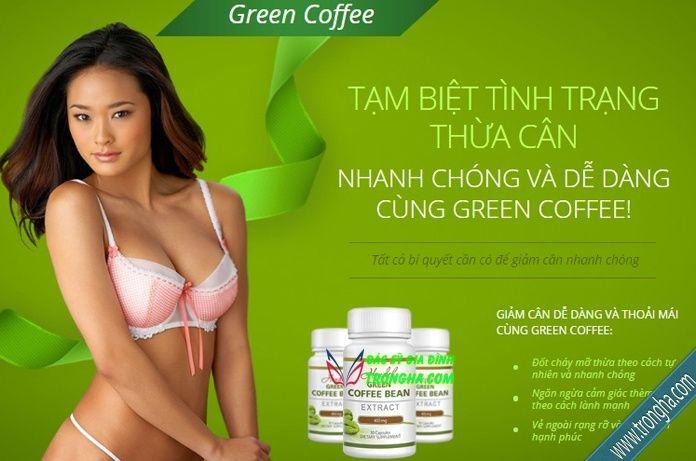 Green Coffee là sản phẩm 100% tự nhiên, nguồn axit chlorogenic (đốt cháy mỡ) tự…