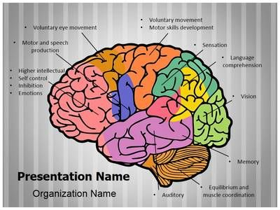 34 best brain powerpoint templates human brain powerpoint check out our professionally designed and world class brain function ppt toneelgroepblik Choice Image
