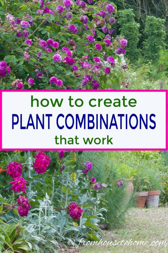 10 Tips For Creating Plant Combinations That Work Gardening From House To Home Plants Plant Combinations Beautiful Gardens