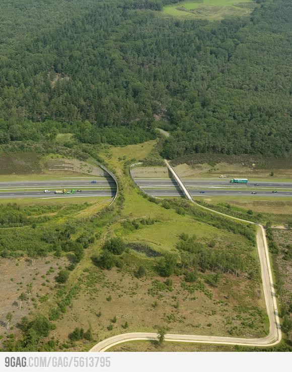 Wildlife Overpass - super cool