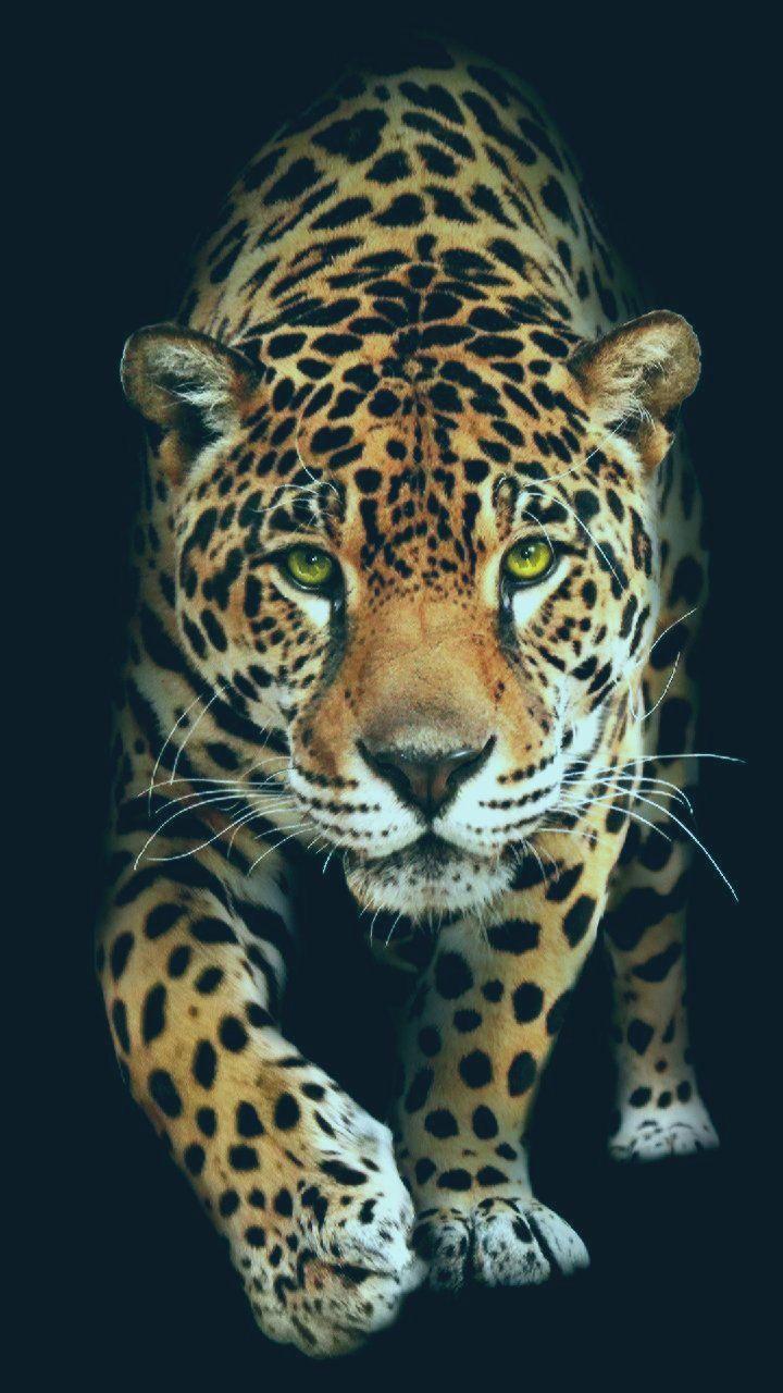 Huawei Hintergrundbild Laden Sie Jaguar Wallpaper Von Georgekev 68 Jetzt Kostenlos Auf Zedg Auf Jaguar Wallpaper Jaguar Animal Wild Animal Wallpaper