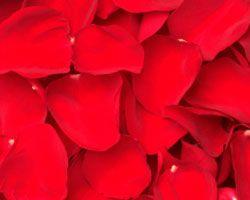 Bulk Red Rose Petals - Bulk Rose Petals Canada| Wholesale Red Rose Petals | Buy Red Rose Petals | Discount Red Rose Petals at BunchesDirect