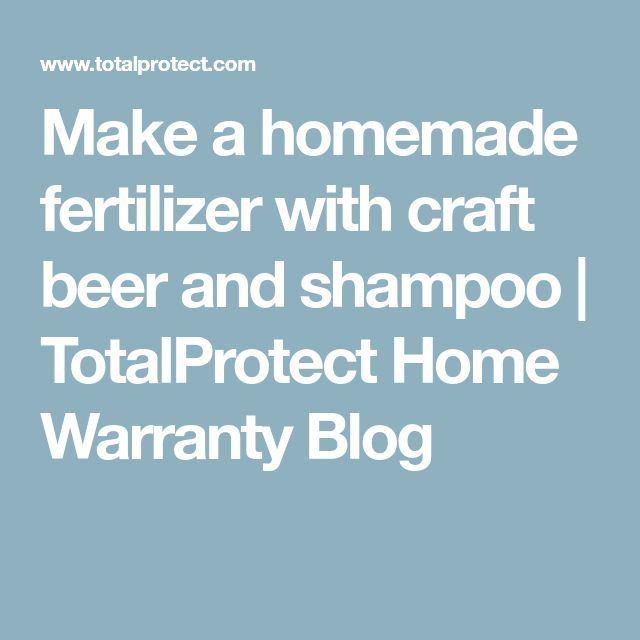 Make a homemade fertilizer with craft beer and shampoo | TotalProtect Home Warranty Blog