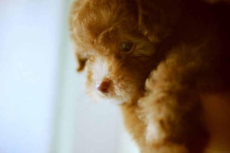 Puppy from heaven!!