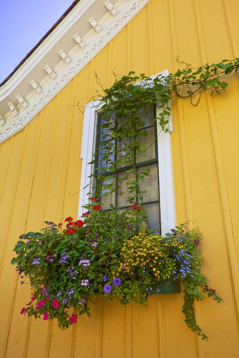 window box out of control: Flowerbox, Color, Beautiful Window, Windows, Yellow House, Garden, Flower Boxes, Window Boxes