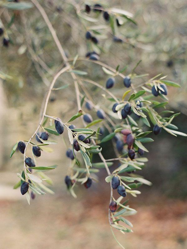 is an olive a fruit strange green fruit