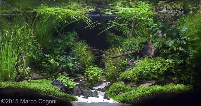 ... + images about Aquariums on Pinterest Cichlids, Aga and Aquascaping